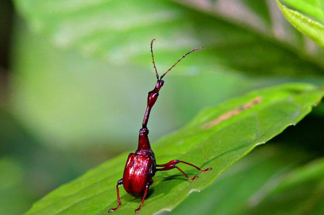 0种动物昆虫图片