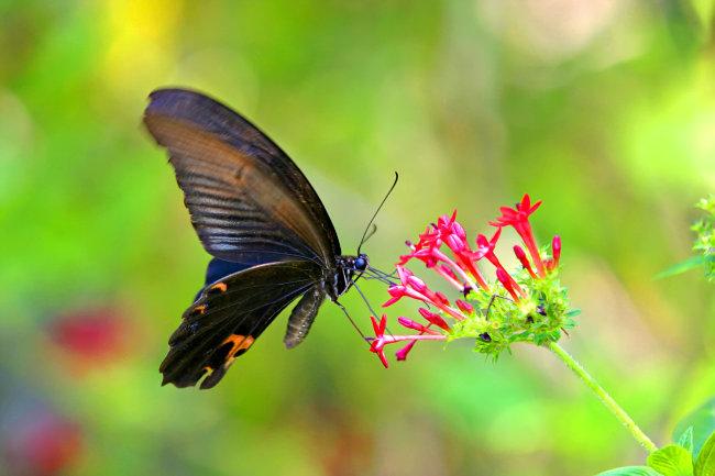动物树叶画蝴蝶