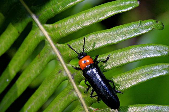 野生动物 爬虫 昆虫 大自然 生物 小生物 小虫子 节肢动物 环境 野外