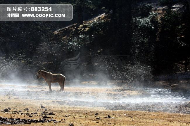 动物风景图片素材(图片编号:883254)