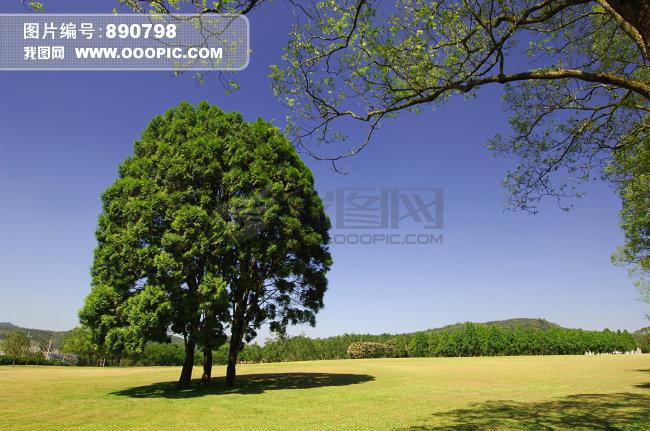 > 蓝天草地树木风景图