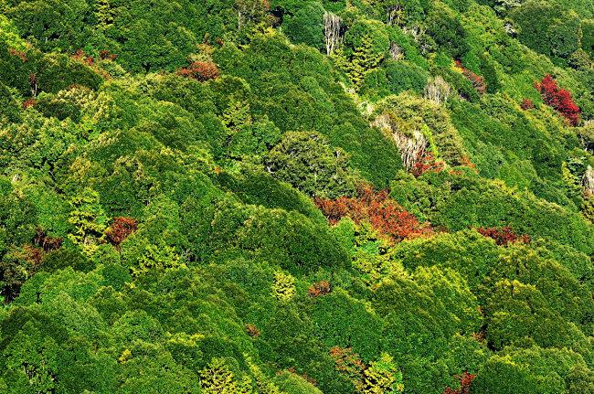 森林俯视图模板下载 森林俯视图图片下载 树木 阳光 绿地 大自然 树林