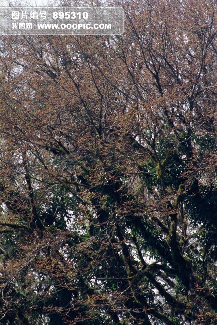 树木风景图图片下载 树木 树枝 树叶 天空 树林 唯美 宁静 近景 垂直