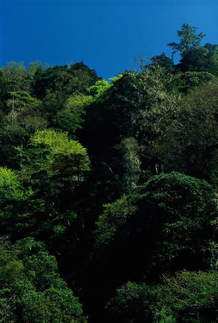 树木风景图图片下载 树木