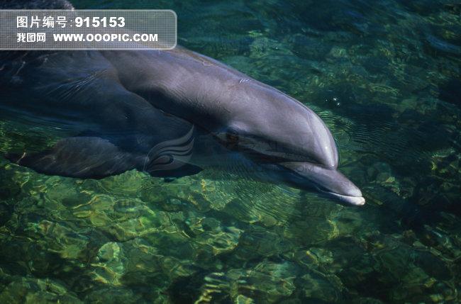 海洋动物 鲸鱼 海中鲸
