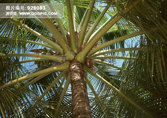 椰子树下动物图