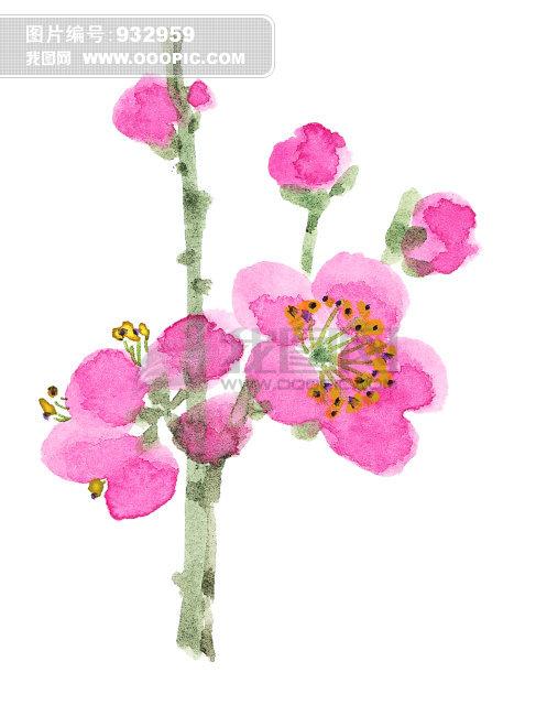 桃花图片手绘水彩笔画