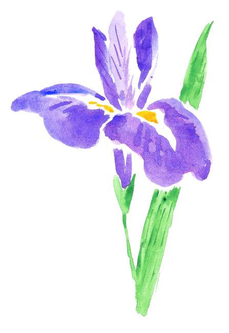 插画 矢量素材 图片下载 背景 绘画 白色背景 花卉 工笔画 水墨画 仅