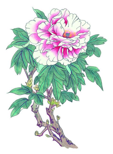 牡丹花彩绘水墨插画高清图片矢量素材下载