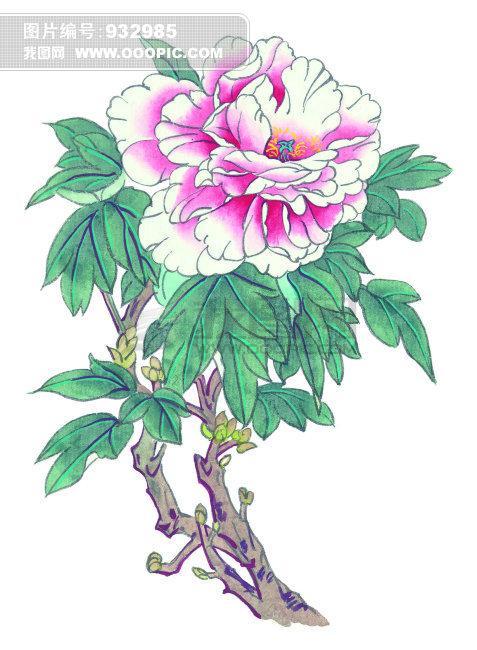 牡丹花图片 竖屏 手绘