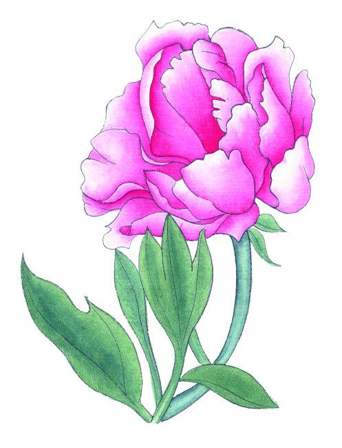 卡通 春天 植物 绘画插图