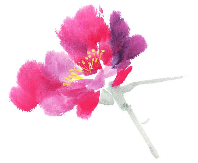 手绘 花 叶子 茎 花瓣