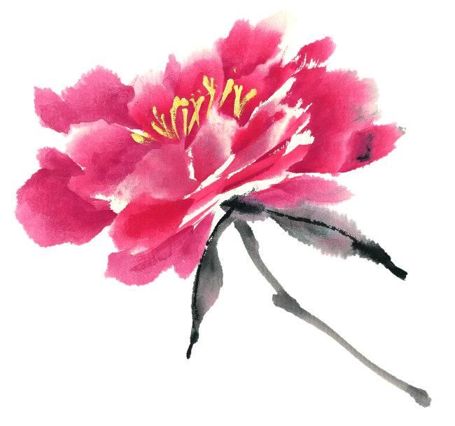 牡丹花      手绘 花 叶子