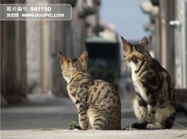 两只回头的猫图片素材(图片编号:941190)_动物图片库