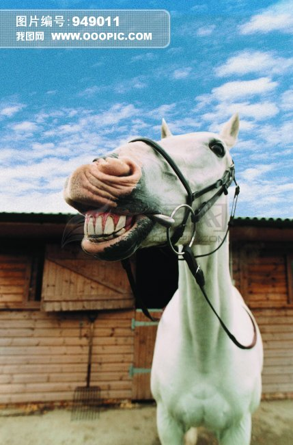 [jpg]马驴 家畜 动物 图片
