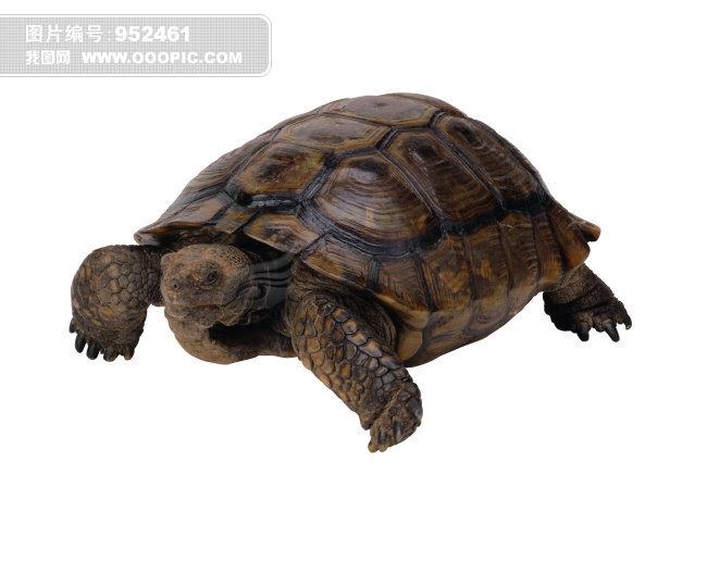 乌龟 爬行动物 动物 图片免费下载