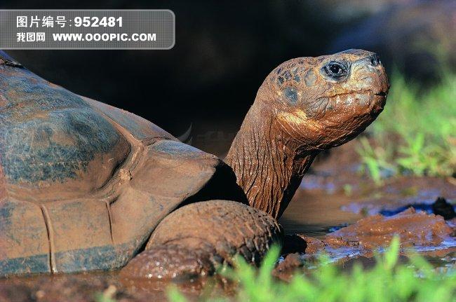 [jpg]乌龟 爬行动物 动物 图片