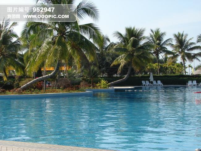 海边椰子树风景图片 海边椰子树简笔画