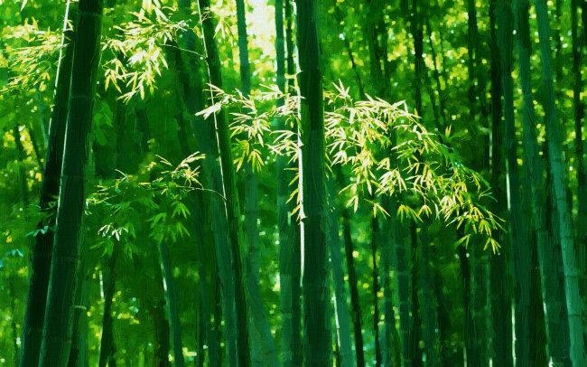 手绘竹林美女图片
