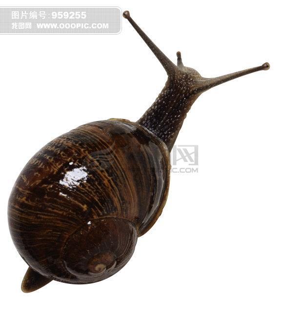蜗牛 爬行动物 动物 大图