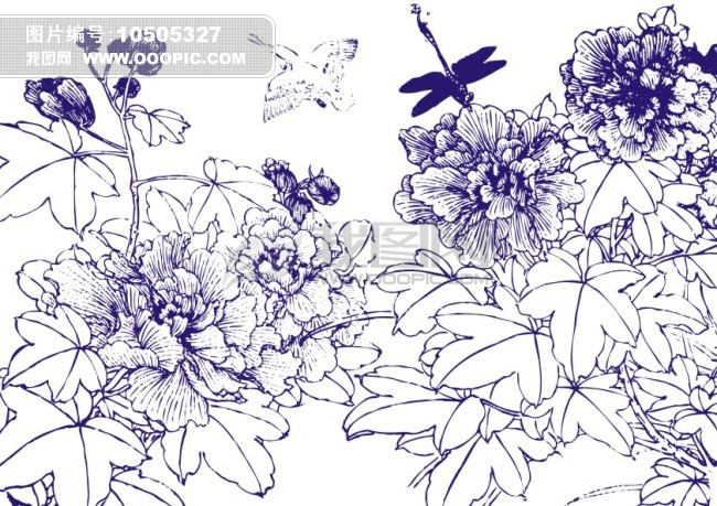 花开富贵-简笔画