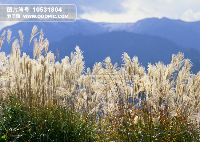 农作物风景