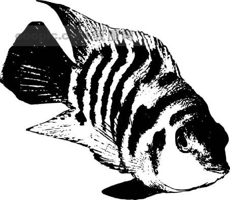 全球首席大百科 水墨; 鱼的水墨画图片[矢量图,ai]