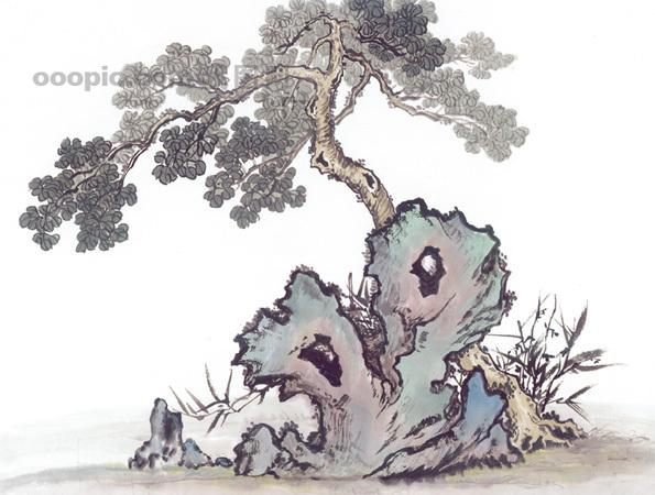 黄山迎客松 松树 树干