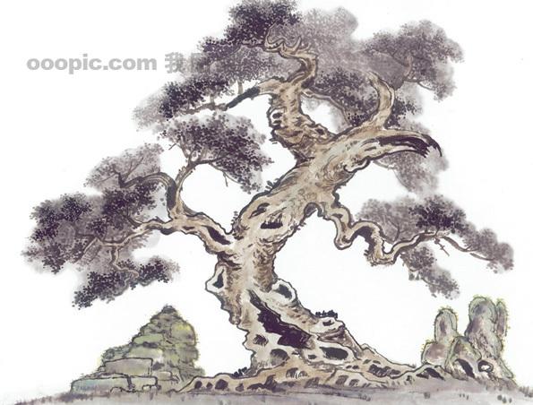 黄山迎客松 松树