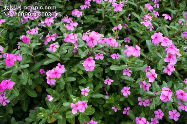 花朵图案背景模板下载(图片编号:595214)_风景|生活