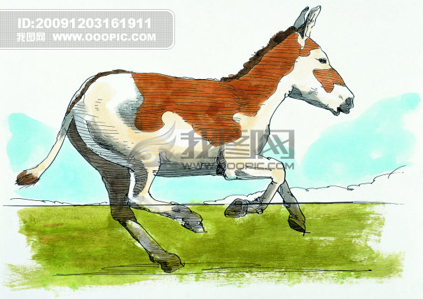 国画可爱动物图片