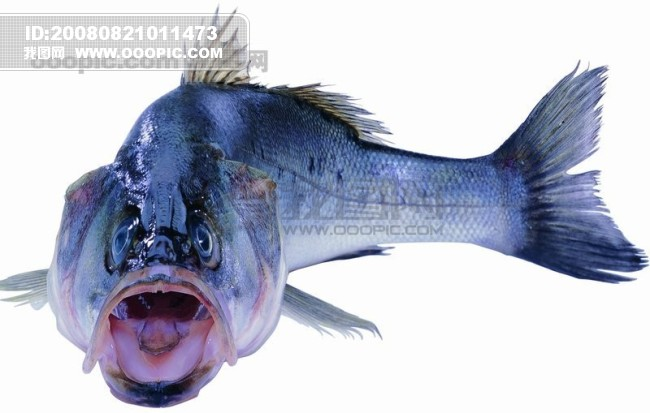 海洋动物 > 图片信息