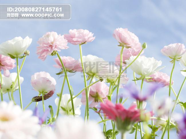 风景花朵模板下载(图片编号:179944)图片