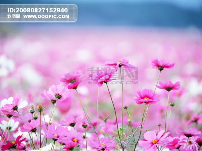 风景花朵_其他_自然景观图片