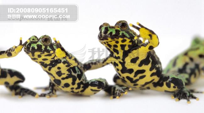 可爱青蛙 蛙类 动物 昆虫 人与动...模板下载 可爱青蛙 蛙类 动物 昆虫 人与动...图片下载 可爱青蛙 蛙类 动物 昆虫 人与动物 动物世界