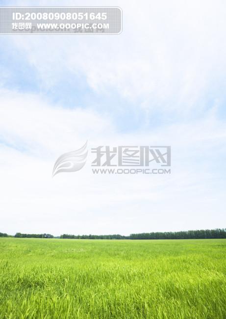 自然风景 天空草地 蓝天白云 草原小草 阳光树木