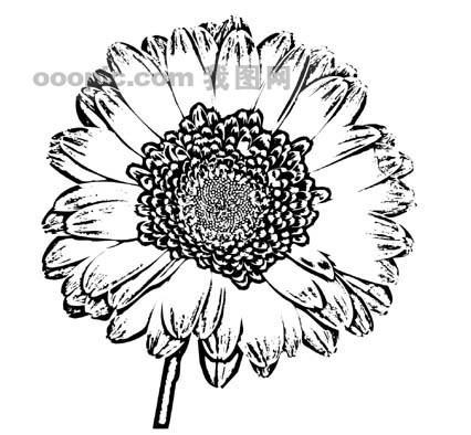 花朵的黑白画; 花朵的黑白画矢量图_植物叶子黑白矢量图_树木; 植物
