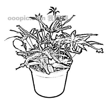 盆栽植物手绘黑白