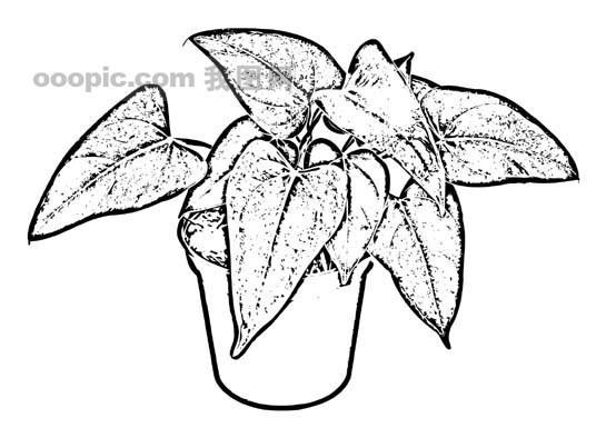 手绘叶子图片黑白