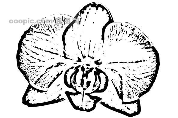黑白叶子插画手绘