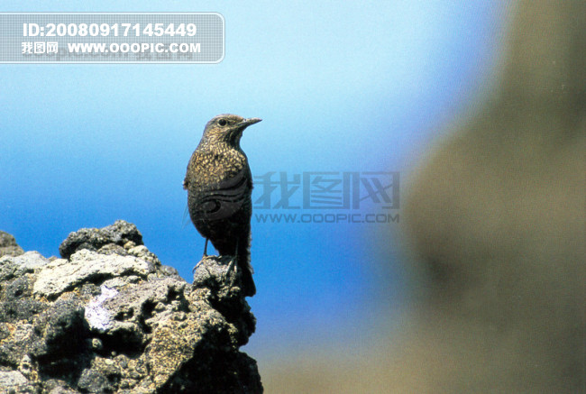 大自然 鸟 种类 品种 飞行动物