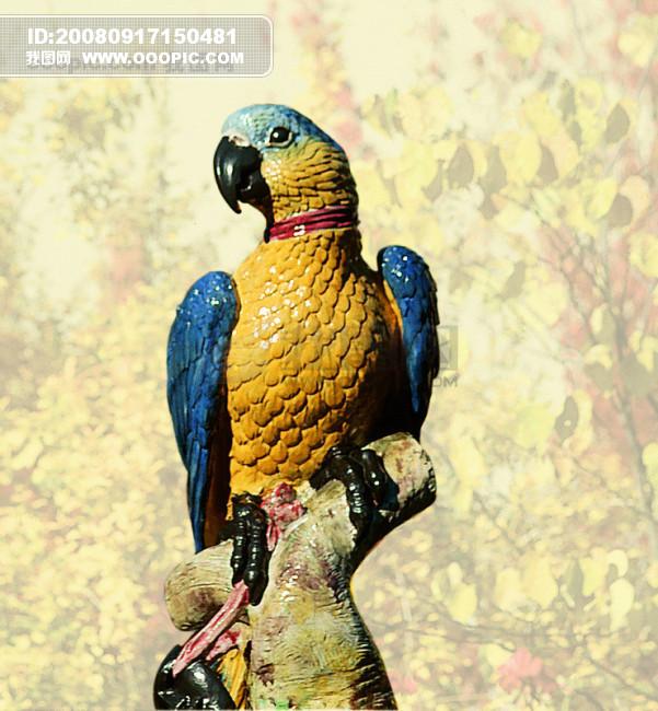 大自然 鸟 种类 品种 飞行动物 .