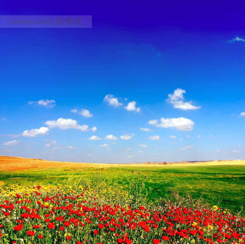 草地天空红色花朵