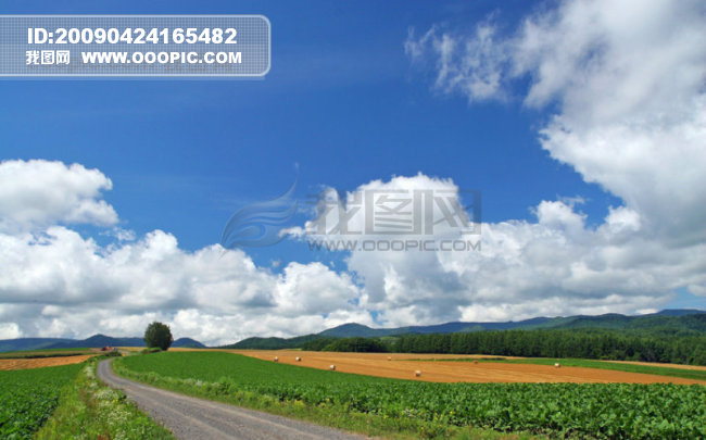 北海道田园风光模板下载 516461