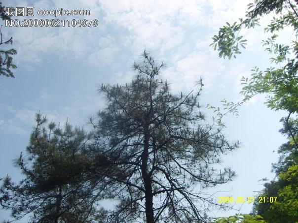 蓝天白云,天空,树木,云彩
