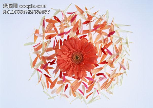 花 花朵 花瓣 素材花 背景模板下载 609608