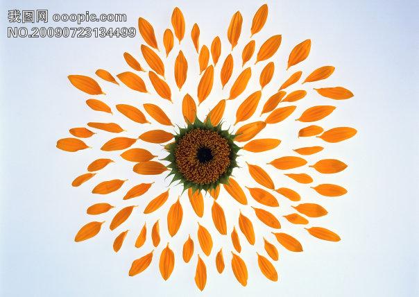 花 花朵 花瓣 素材花 背景模板下载 609649