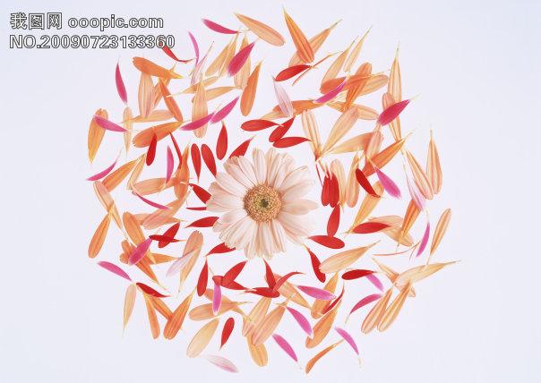 花 花朵 花瓣 素材花 背景