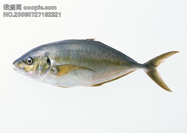 常见海鱼名字及图片