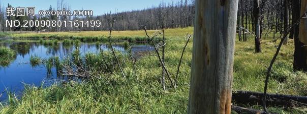 河流绿地树林